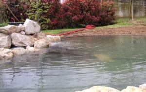 bassin-ornement-6