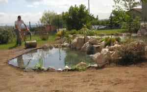bassin-ornement-8