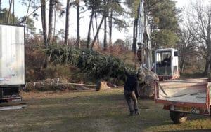 plantation-arbres-gros-sujets-3