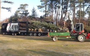plantation-arbres-gros-sujets-4