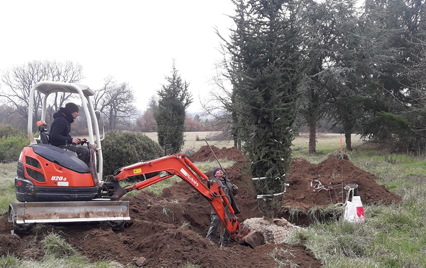 plantation-arbres-gros-sujets-6