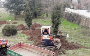 plantation-arbres-gros-sujets-7